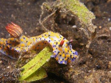 Two Fish Resort Lembeh