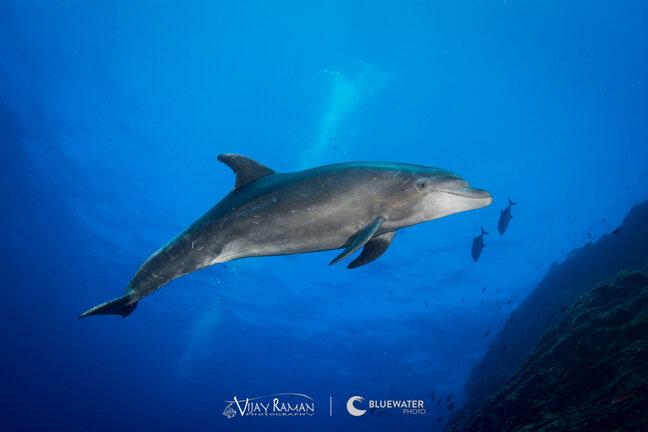 Socorro Dolphin