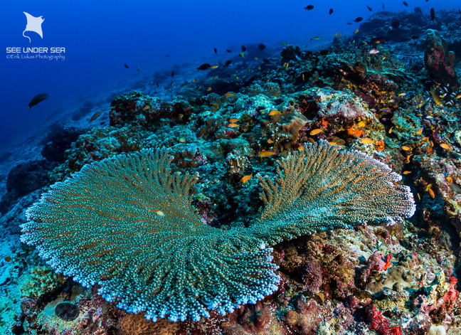 Beautiful hard and soft corals