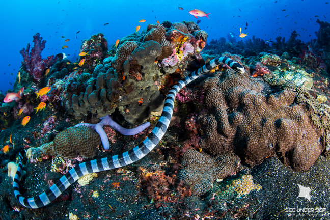 Andaman Islands Dive Travel Guide - Bluewater Dive Travel