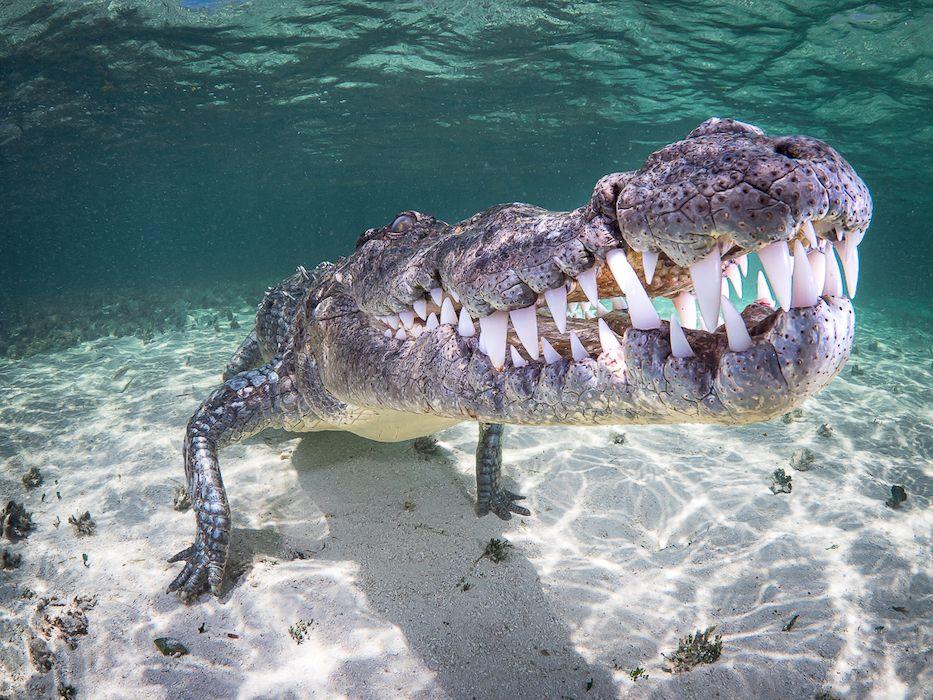 mexico crocodile diving