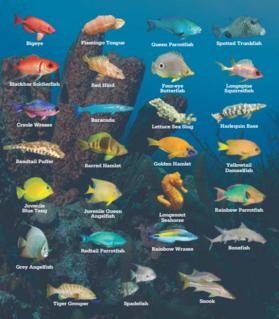 Bonaire Marine Life