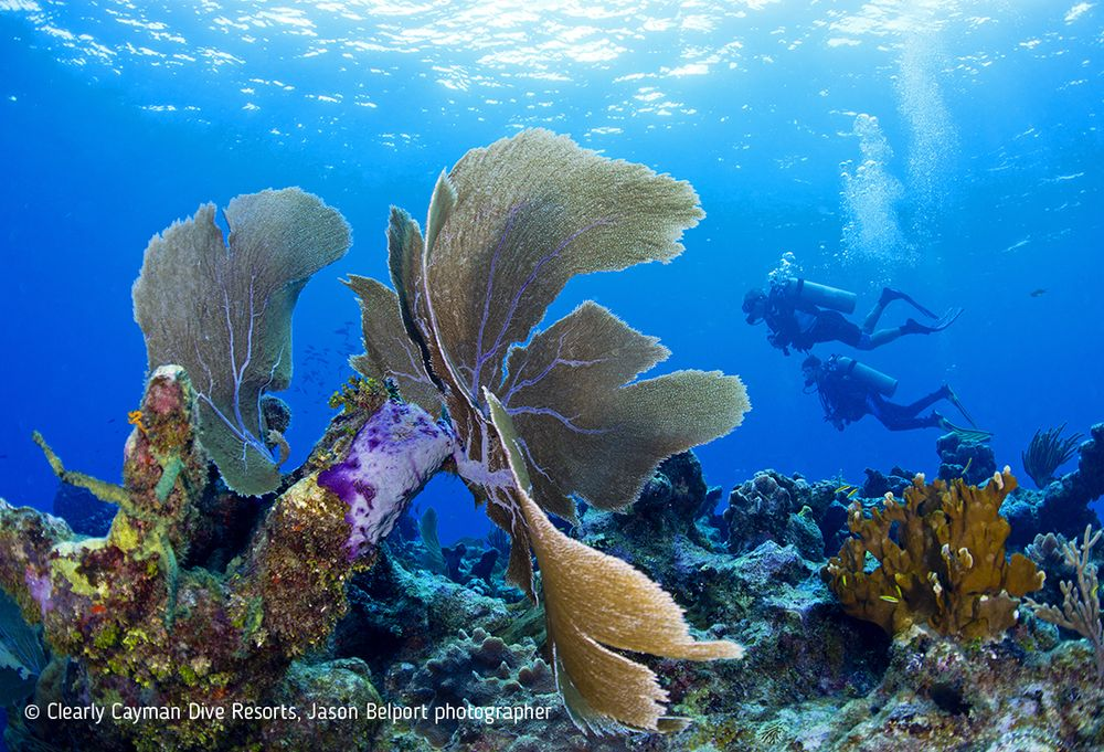 Cayman Brac Reef underwater photo