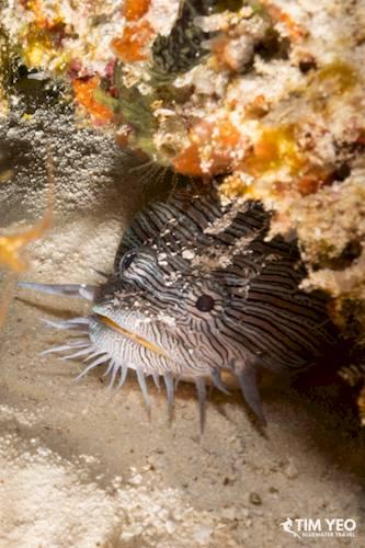 cozumel marine life