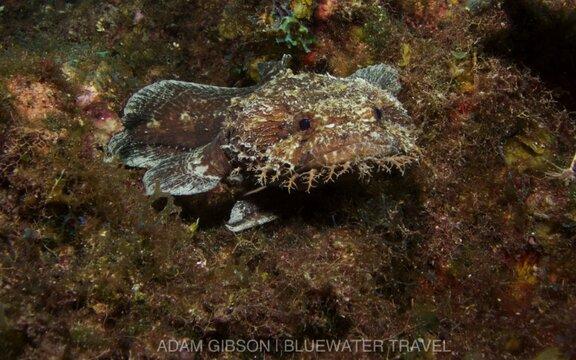 Occidental Grand Cozumel Resort - Pro Dive Mexico