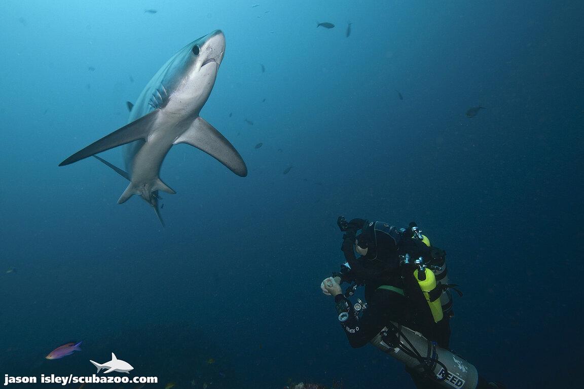 Evolution Diving Resort