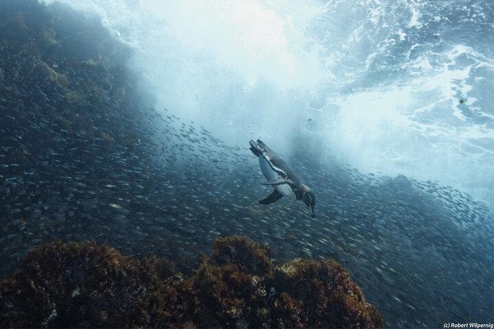 Galapagos Master