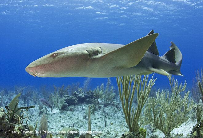 Little Cayman Beach Resort's underwater photo