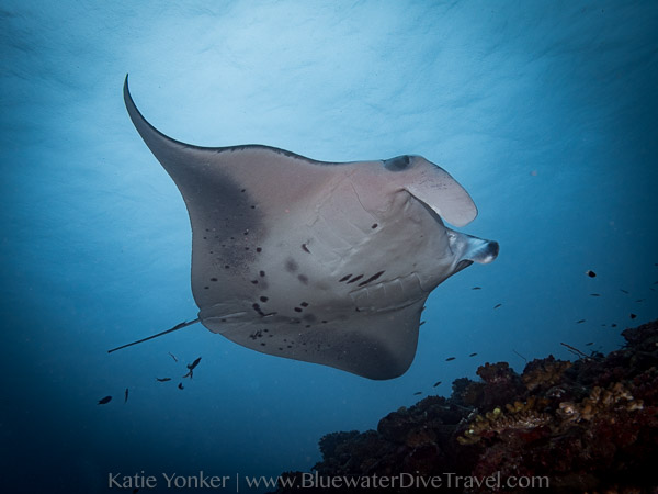 Best Manta Diving
