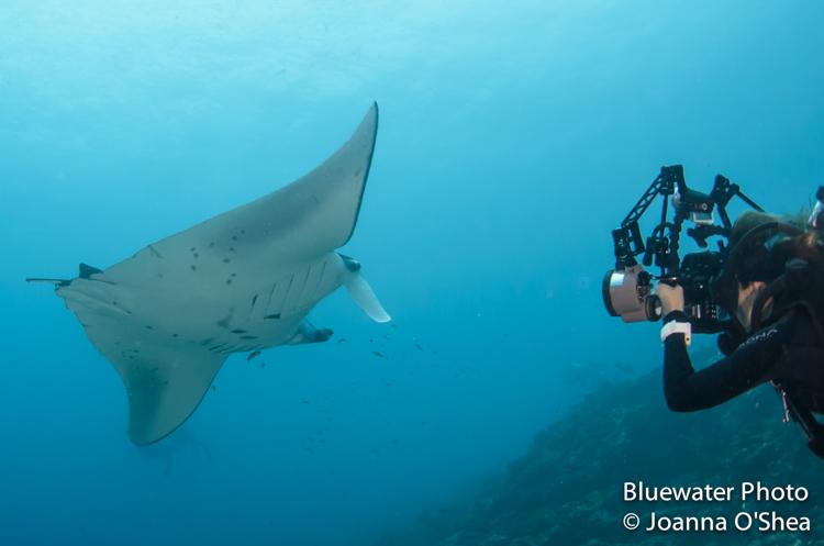 maldives manta ray