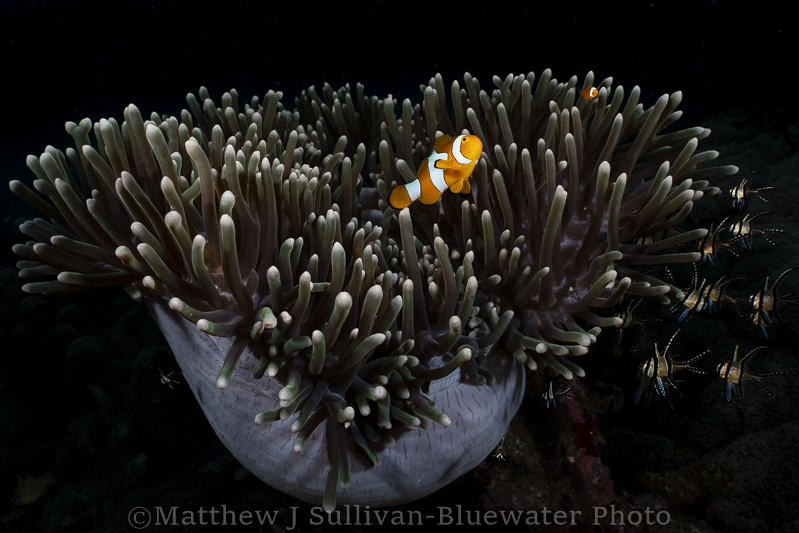 Lembeh Underwater Photo