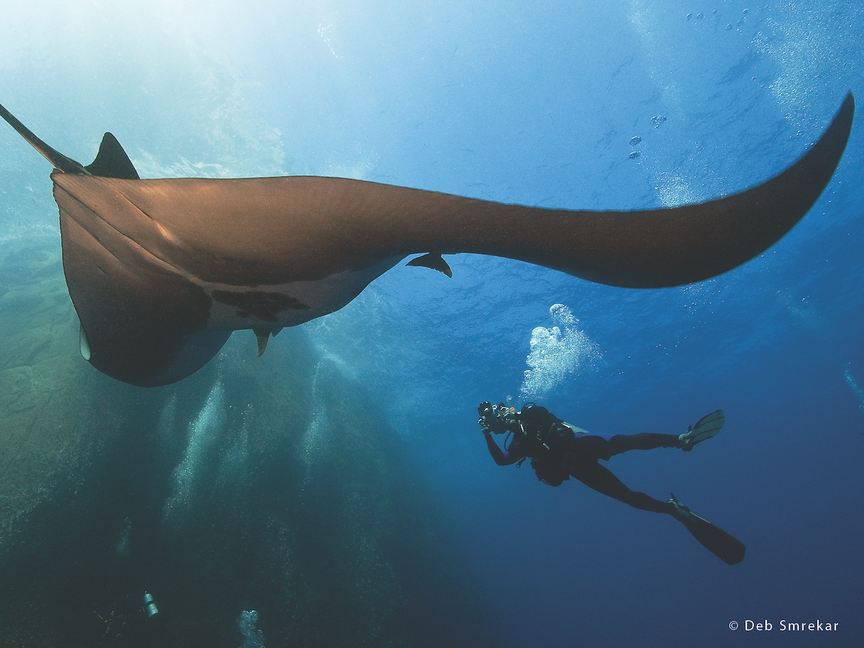 Nautilus Under Sea Bluewater Dive Travel