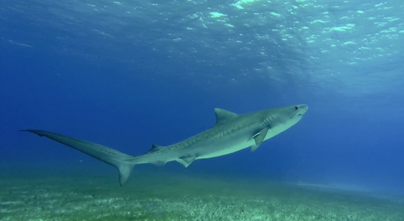 Reef Oasis Dive Club Viva Bahamas