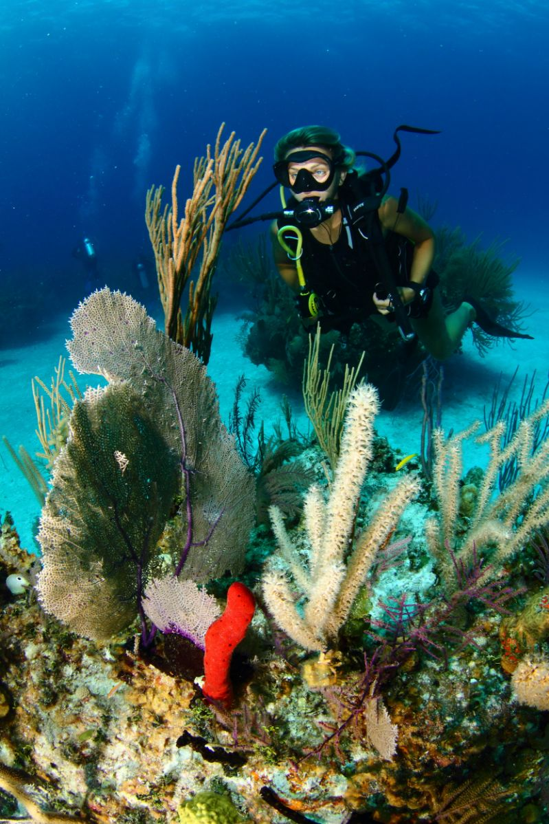 Reef oasis dive club viva bahamas reviews photos - Reef oasis dive club ...