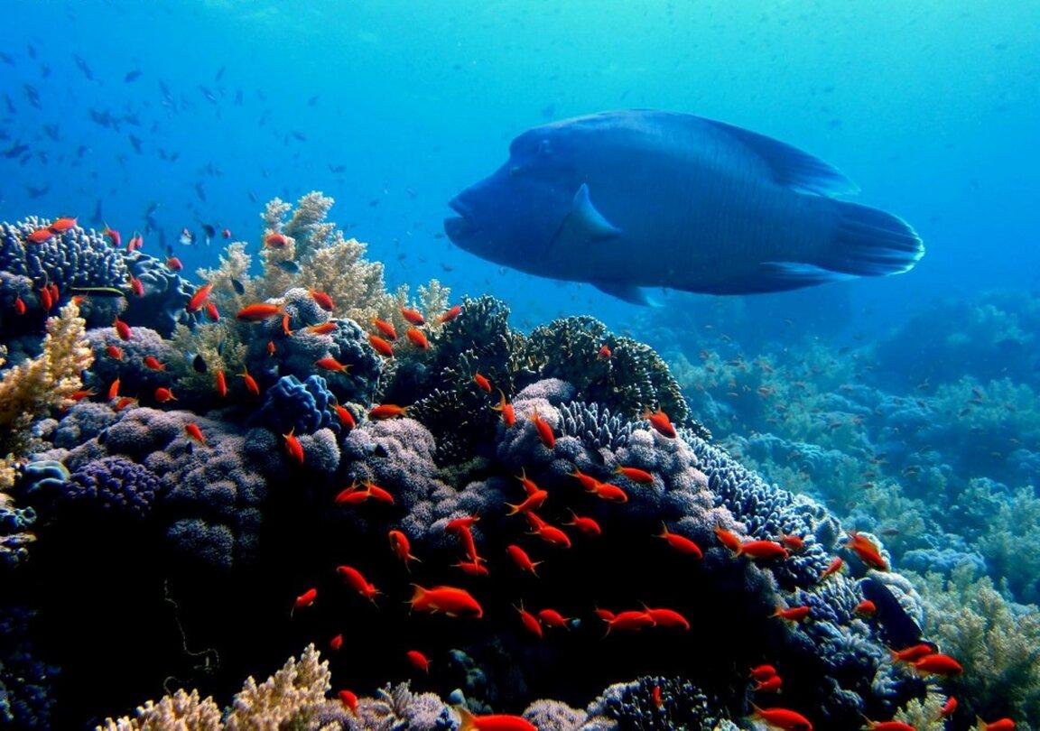 Reef oasis dive club sharm el sheikh reviews photos - Reef oasis dive club ...