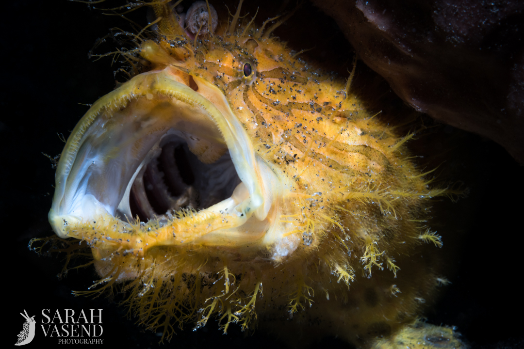 Lembeh Underwater Photo Workshop Trip October 2018
