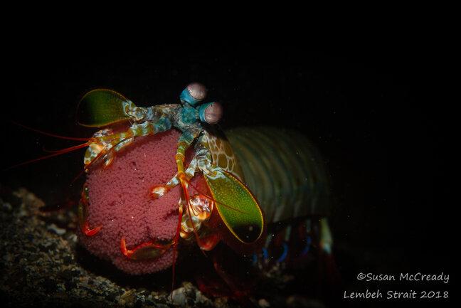 Lembeh Underwater Photo Workshop Trip October 2018