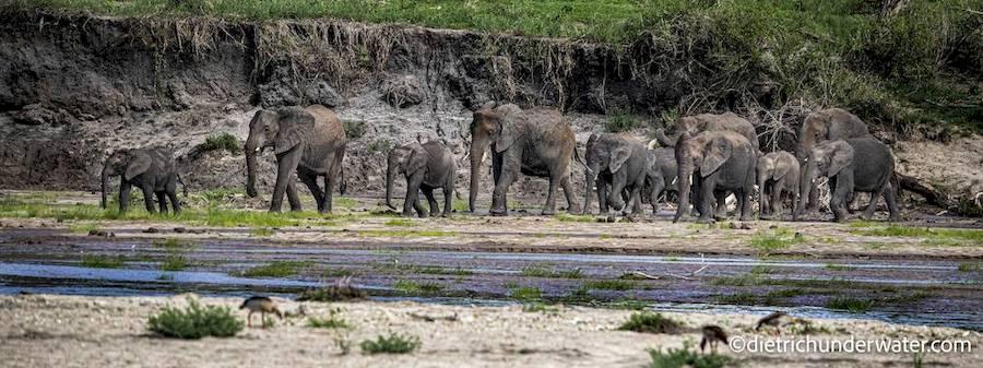 big game safari tanzania