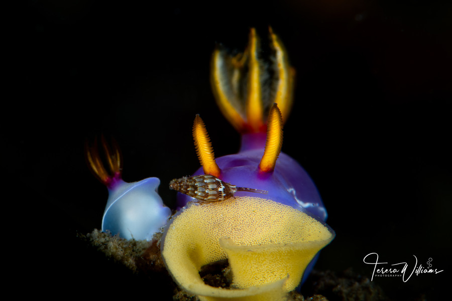 Lembeh 2019 Workshop
