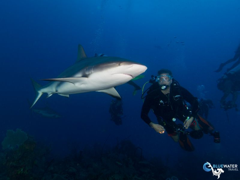 Bluewater Travel and Eco Dive Center Cuba Trip Recap - Bluewater