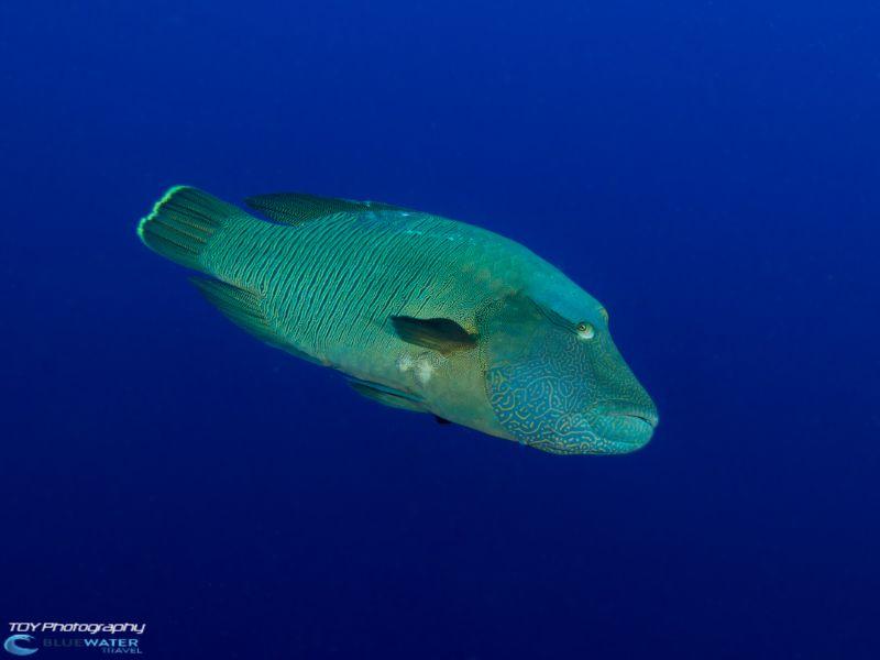 Palau marine life