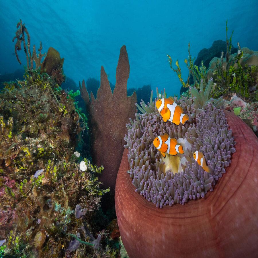Tufi Resort Papua New Guinea Reviews Amp Specials