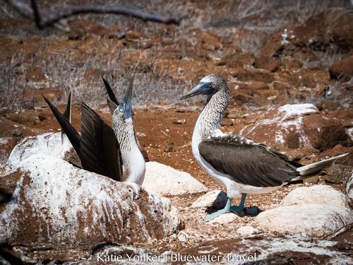 Galapagos May 2018 Trip Report