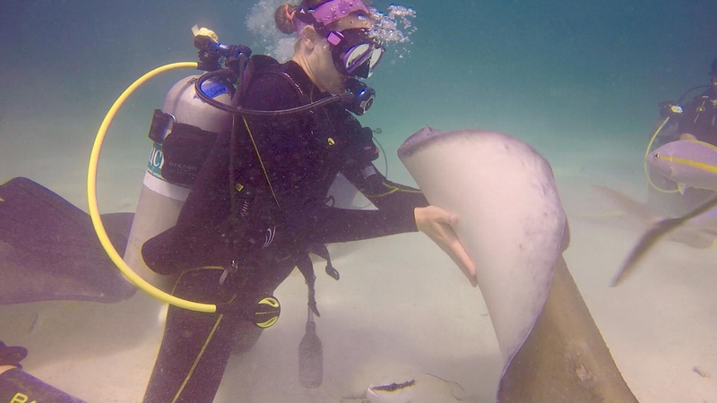 Stingray Interaction at Stingray City during Grand Cayman dive trip 2019