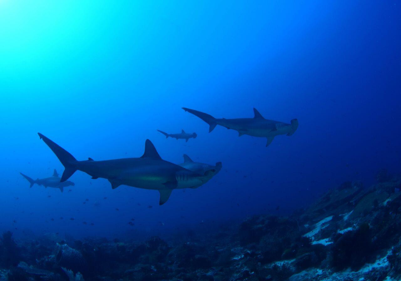 Alami Alor Dive Resort