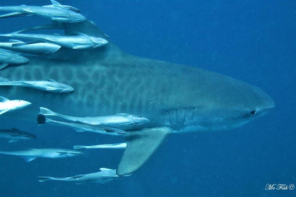 sardine run 2021