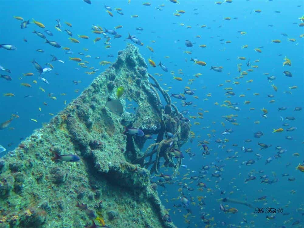 Aliwal Shoal Underwater Photo