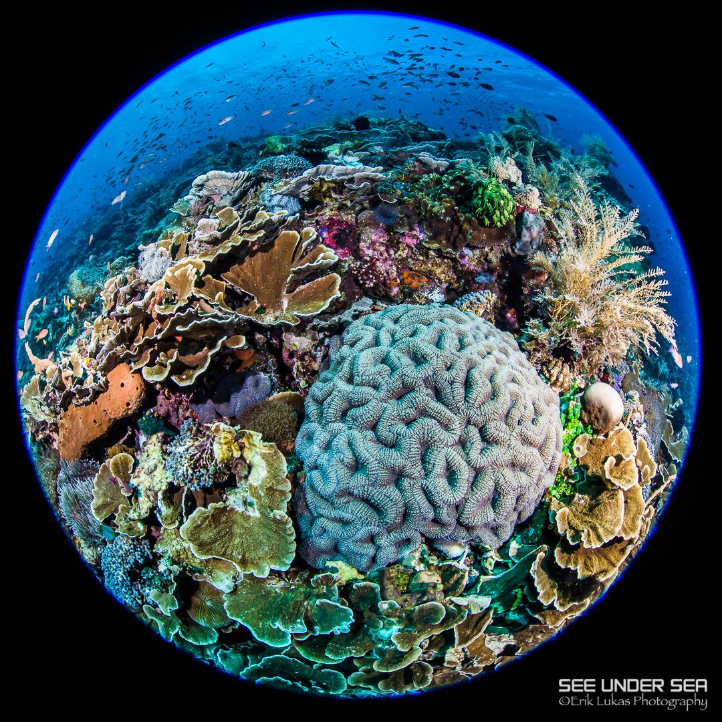 Alor Diving
