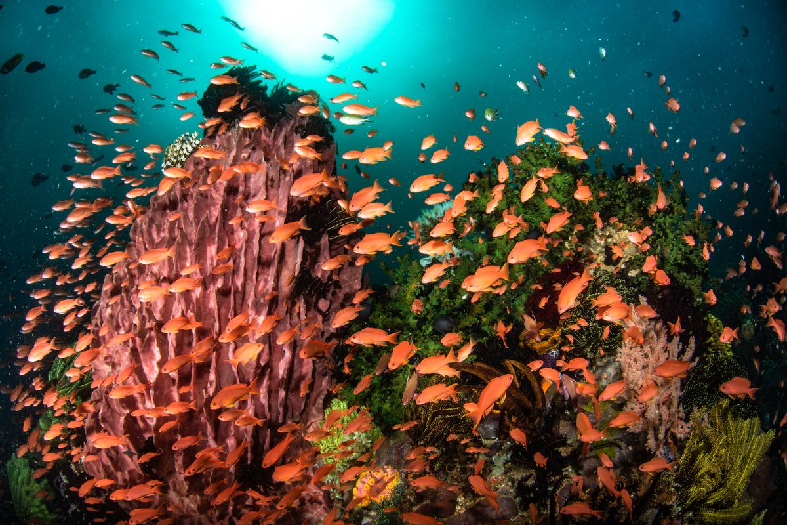 Anilao Underwater December 2018