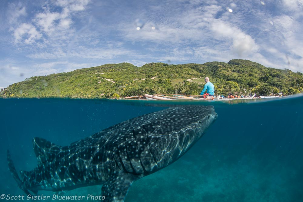 Whale Shark split shot Oslob