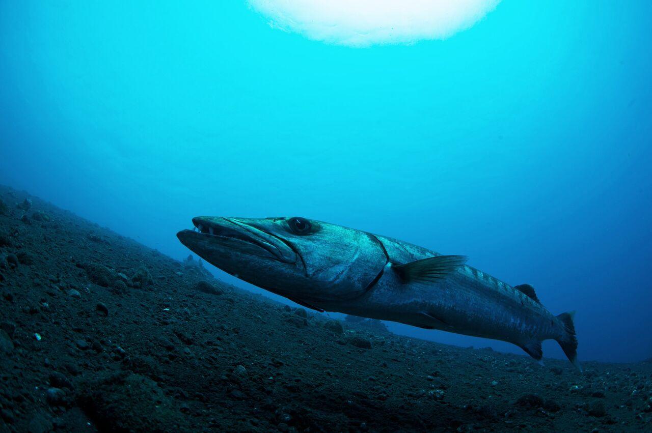 Bali Hai Diving Adventures