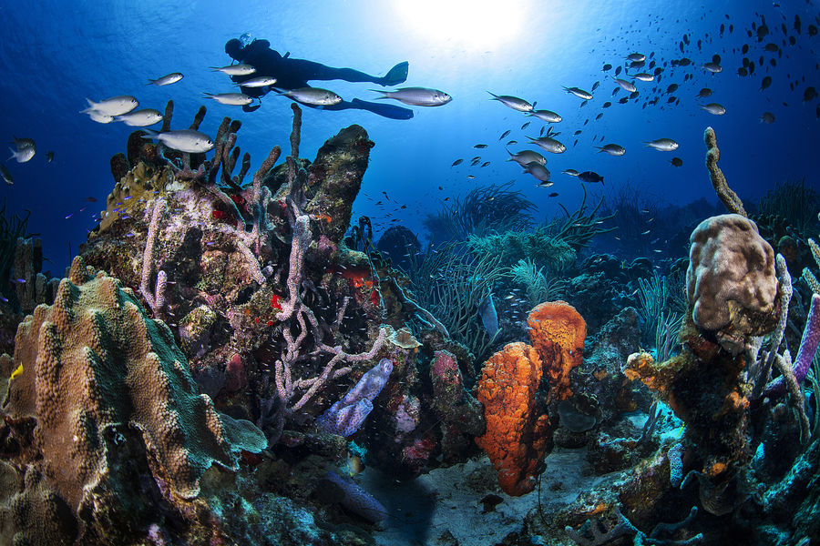Curacao's reefscape