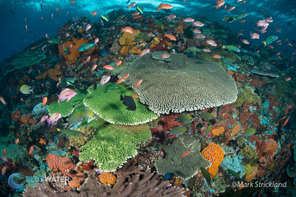 Best Diving in Indonesia - Top 10 - Bluewater Dive Travel