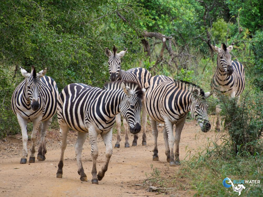 African Big 5 Safari