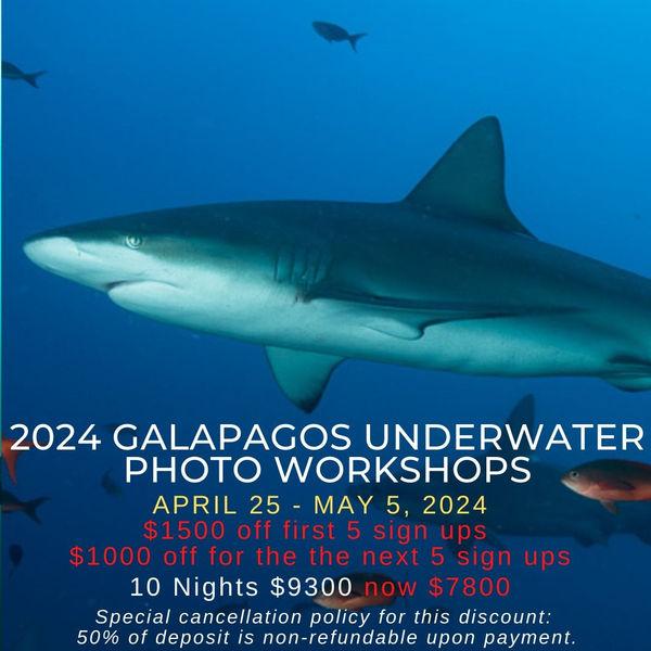 Galapagos Underwater Photo Workshop 2024