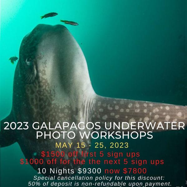 Galapagos Underwater Photo Workshop 2023