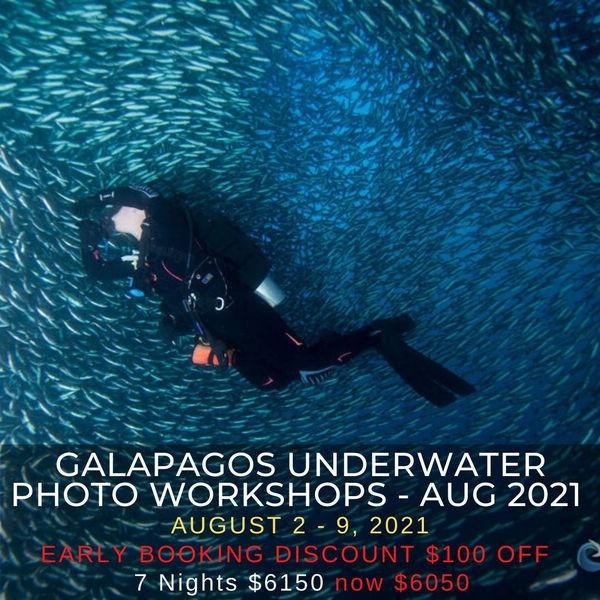 Galapagos Underwater Photo Workshop 2021