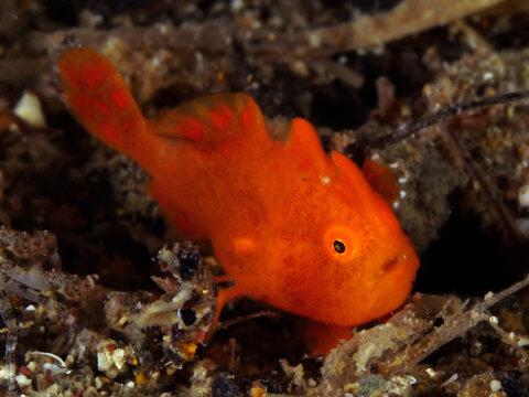 Buceo Anilao Underwater Photo