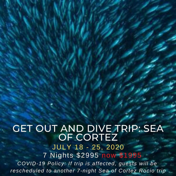 Sea of Cortez Get Out and Dive Trip
