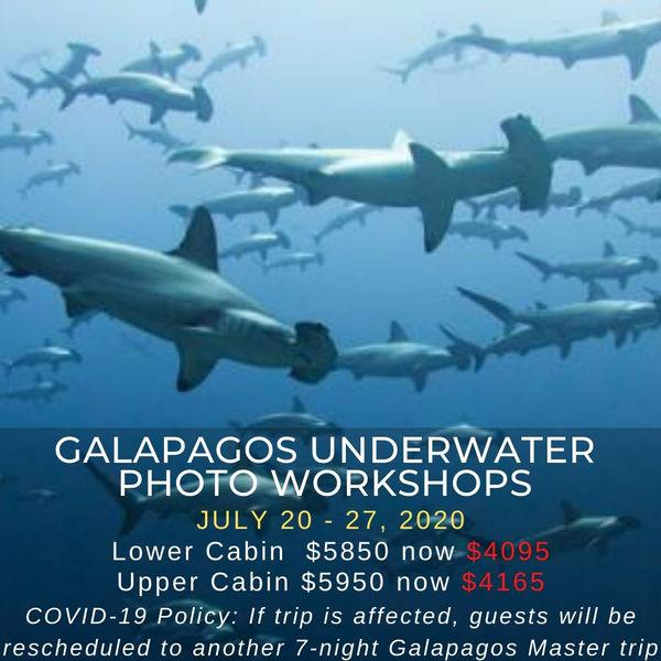 Galapagos Underwater Photo Workshops