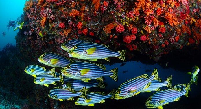 Carpe Diem Maldives