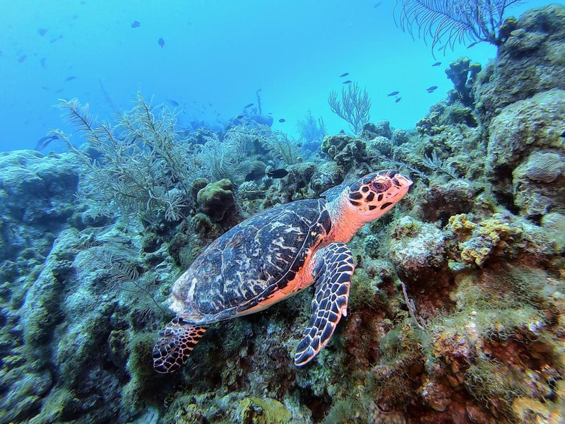 Grand cayman diving