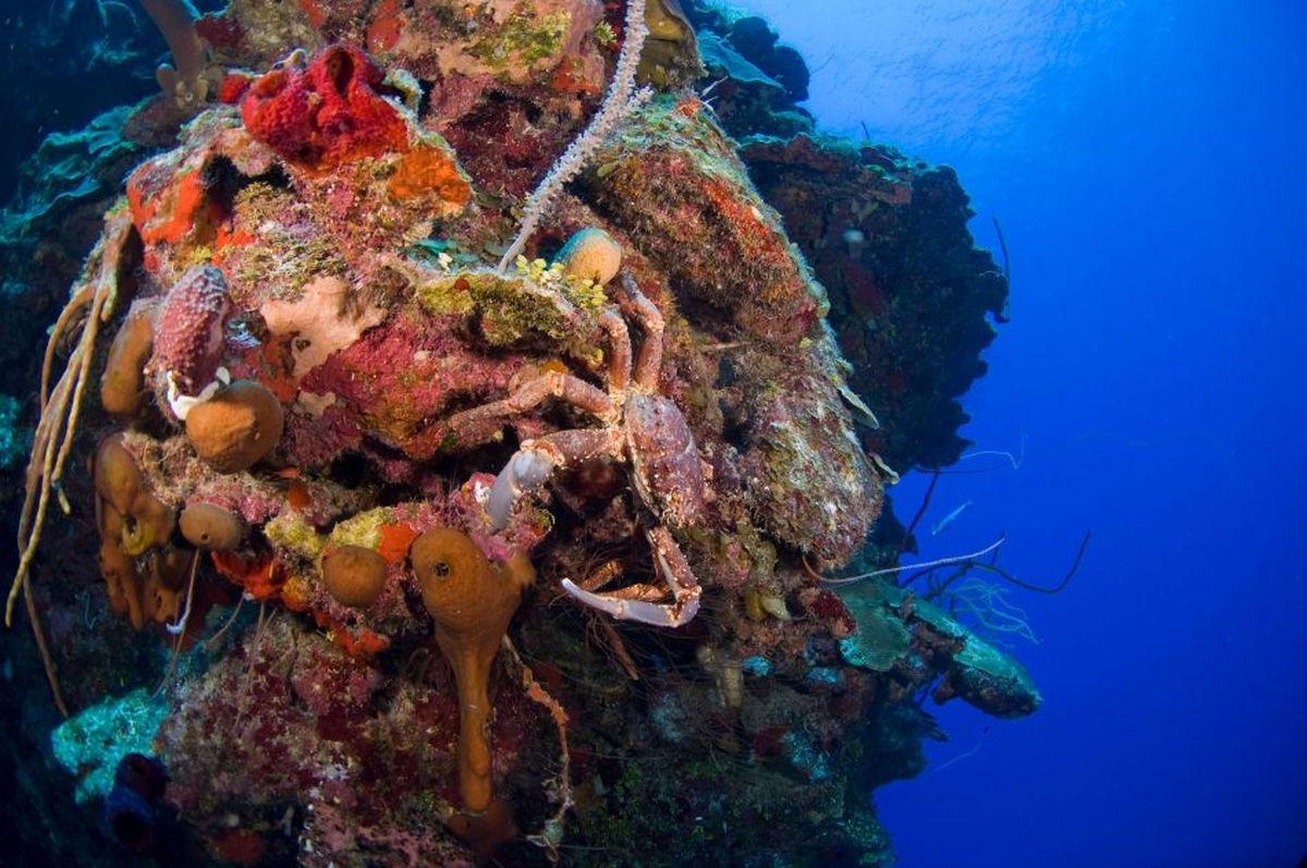 Compass Point Dive Resort