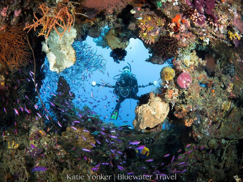 corals PNG