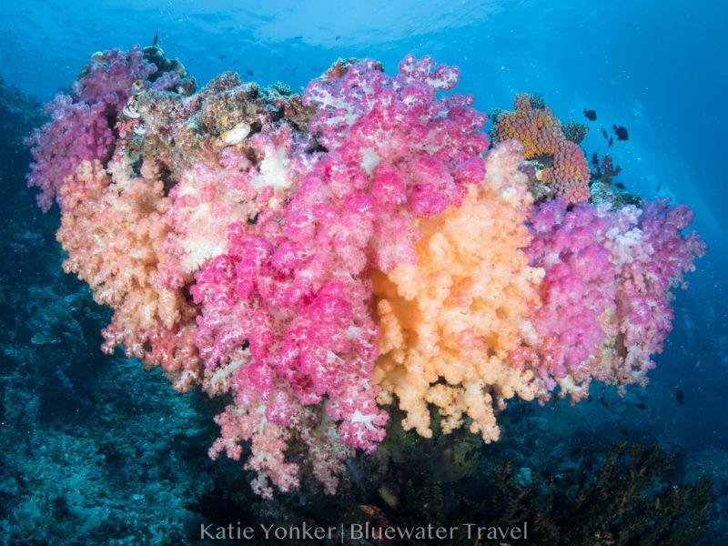 corals misool