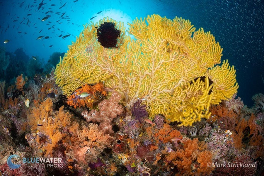 corals raja ampat